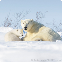Protect Polar Bears From Drilling